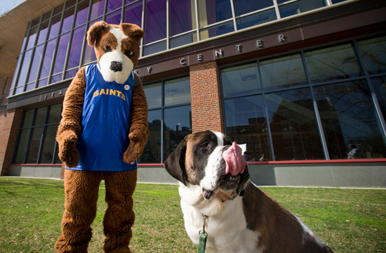Halo the St. Bernard... Go Saints!